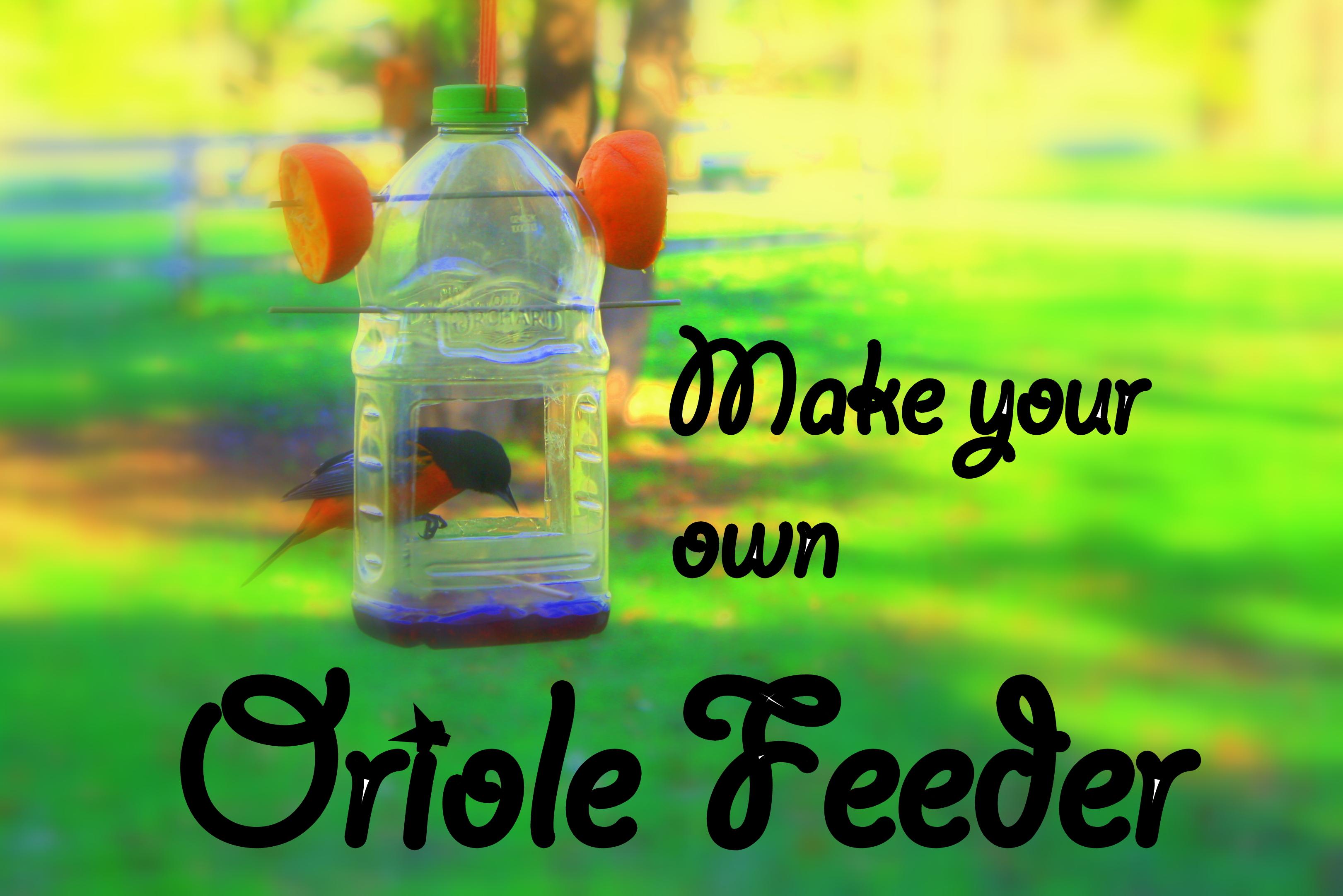oriole bird house plans