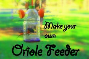 Promo Oriole Feeder Pic